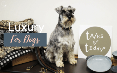 Introducing Tales of Teddy: A Luxury Dog Brand…