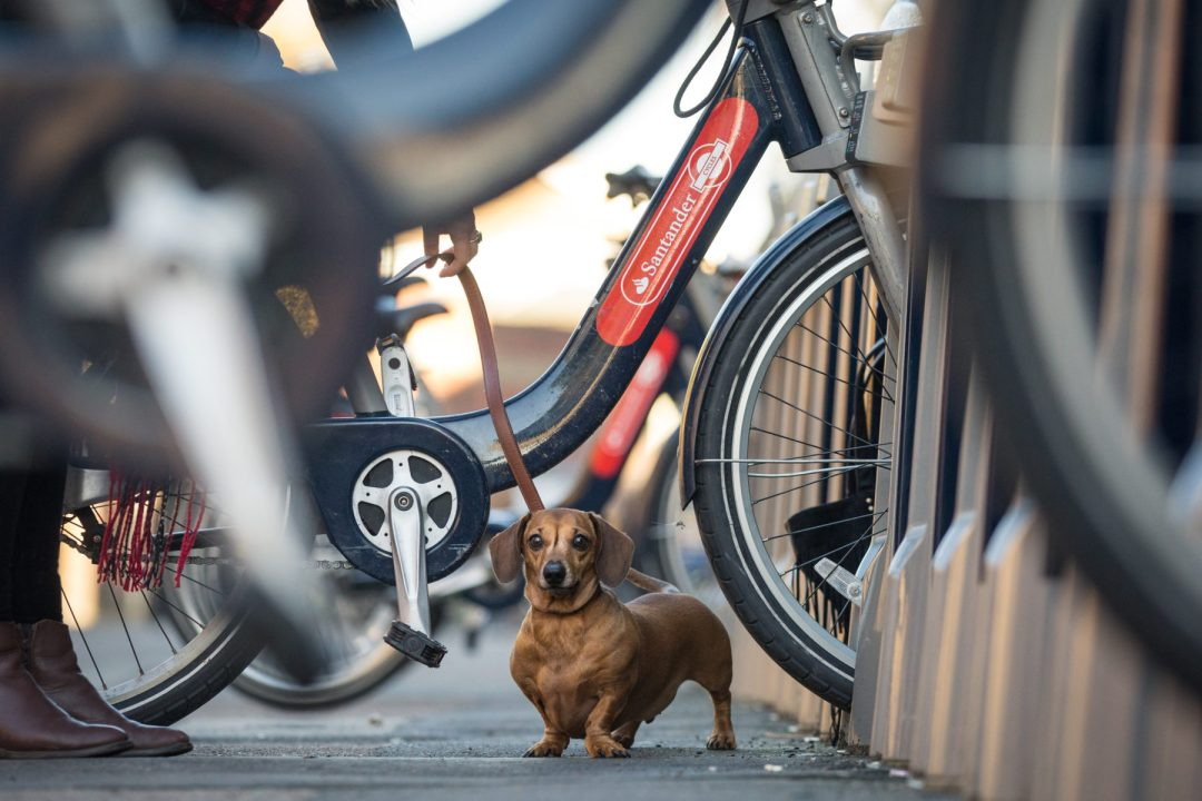 ted-london-dog-photography-12
