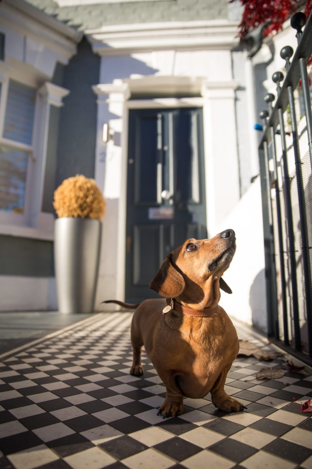 ted-london-dog-photography-17