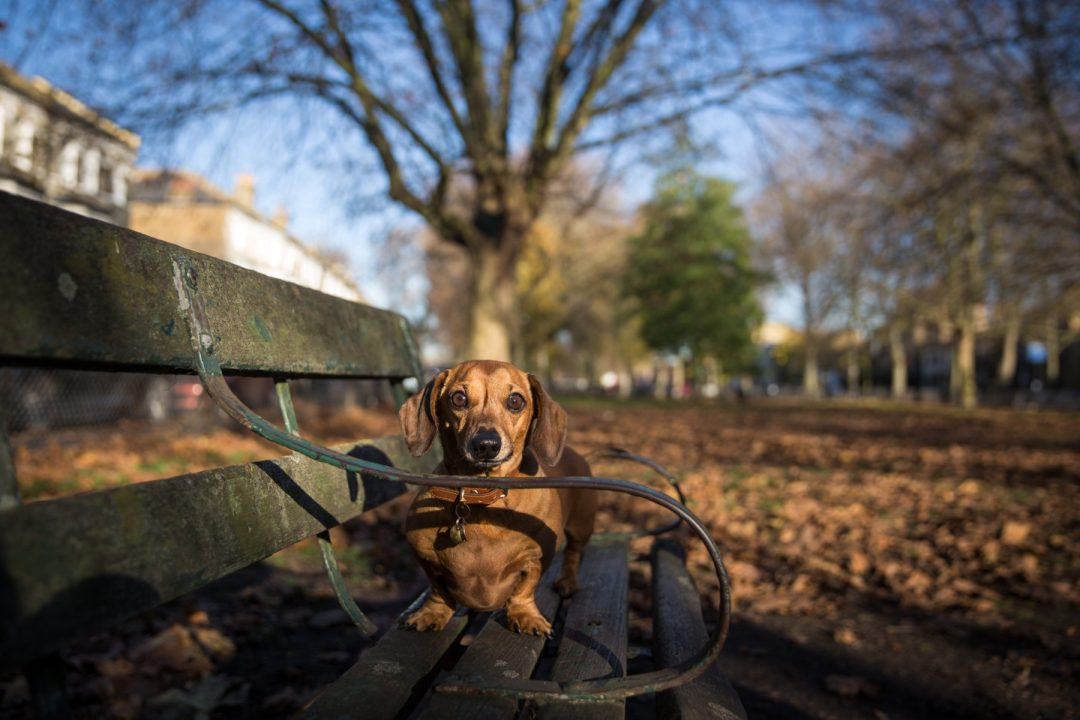 ted-london-dog-photography-22
