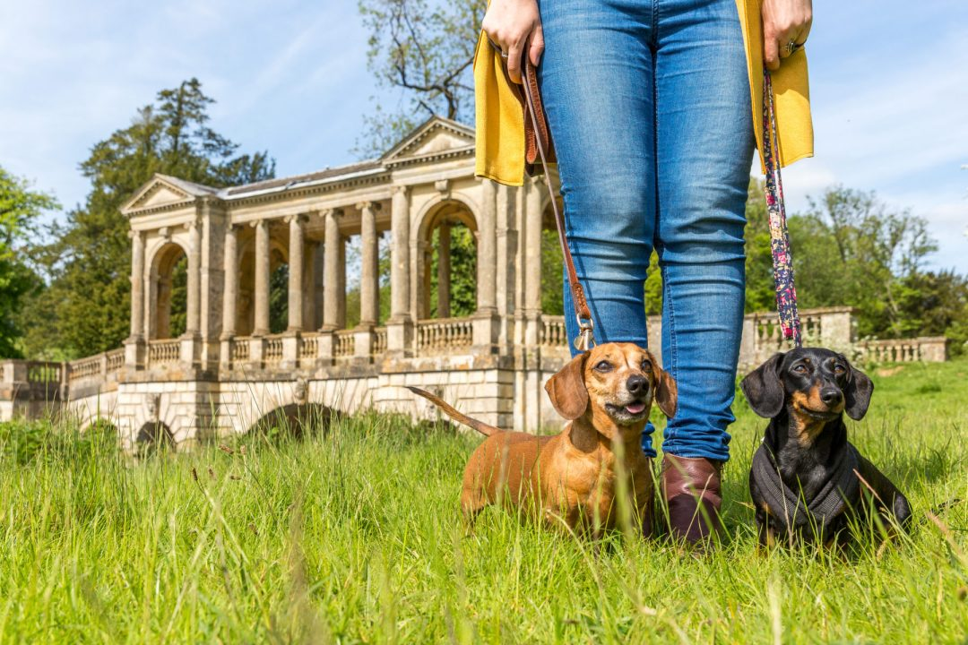 Click to discover why the National Trust dog walks at Stowe make an incredible day out with your dog. Picture shows our two dachshunds from Twilight Bark UK at Palladian Bridge.