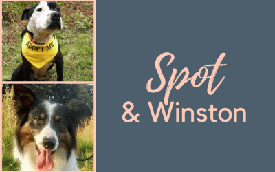 The Little Brown Dog Rescue: Spot & Winston
