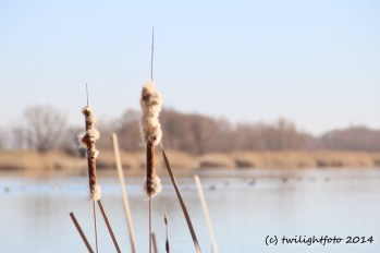 Frühling am Stausee