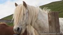 Isländische Blondine