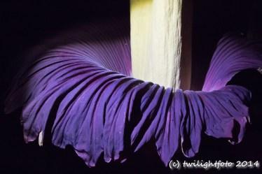 Blüte blau