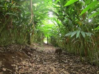 Our plantation walk