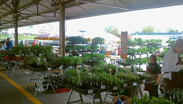 A booth selling starter plants. Herbs and flowers are plentiful.
