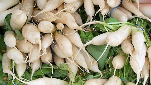 white-radishes-at-burnsville-farmers-market