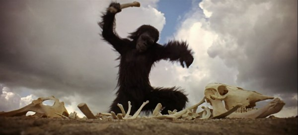 An ape discovering tools.
