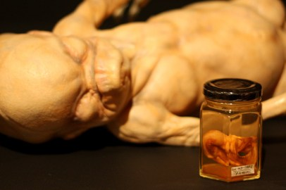 Horror/fantastical medical specimen models