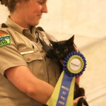Alice the cat with her winning ribbon