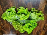 Cody Nutt (lettuce)