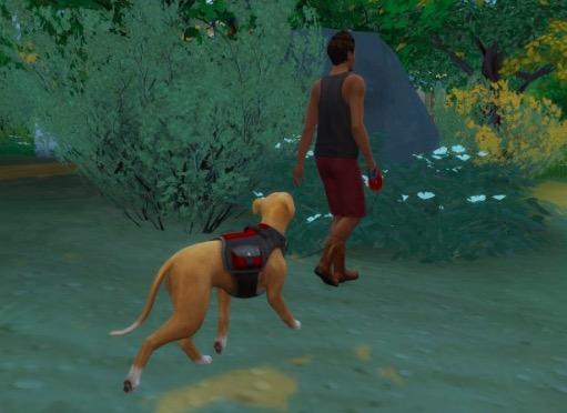 dogwalker mod