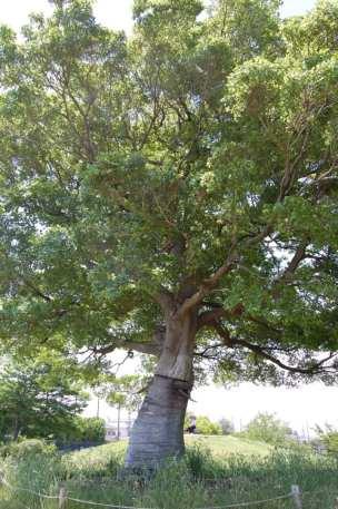 Muv-Luv Tree (11)
