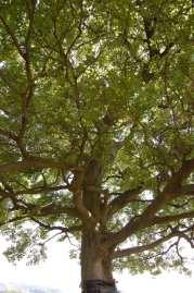 Muv-Luv Tree (8)