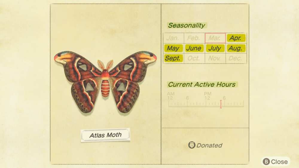 Atlas Moth Animal Crossing New Horizons