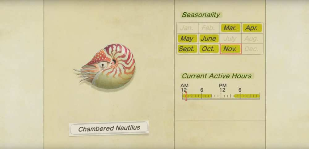 Animal crossing new horizons chambered nautilus