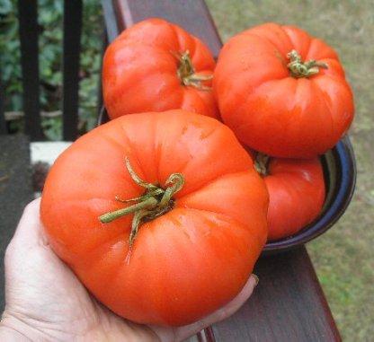 """tomato """"aussie"""""""