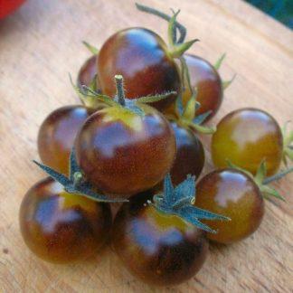 Blue Cream tomato