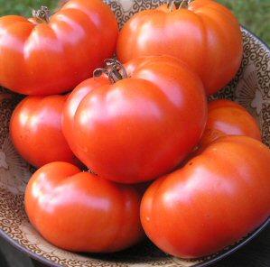 Tomato Pantano Romanesco