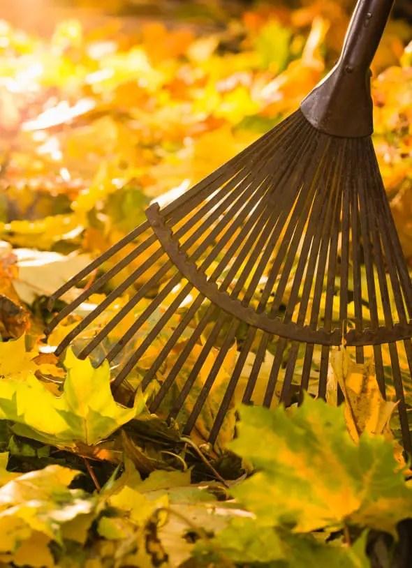 Rake Leaves Or Mow Them