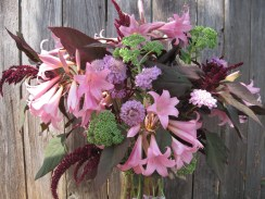 Naked ladies, amaranth, sedum, pinchousion,
