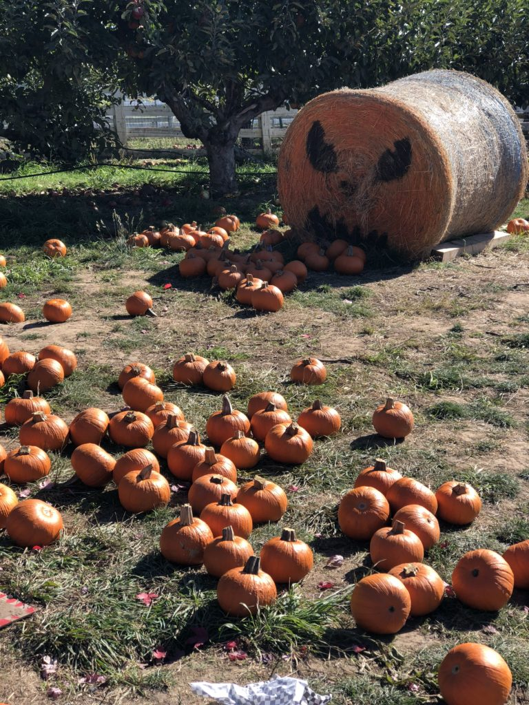 Family friendly Oregon Heritage Farms located in Hillsboro, Oregon is a must see pumpkin patch in the Portland, Oregon area! The pumpkin patch is also an apple farm and they offer great, inexpensive activities for the whole family!