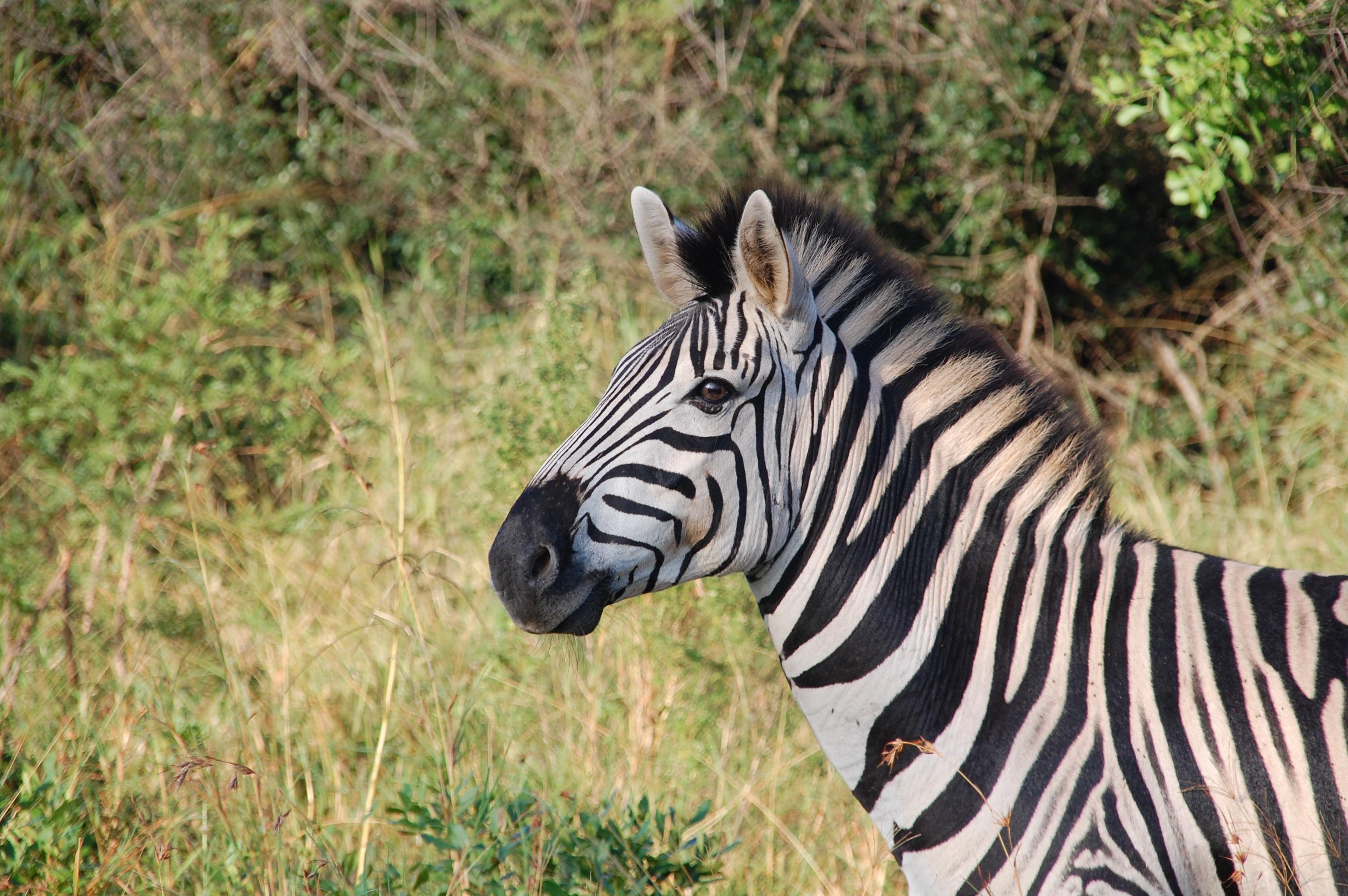 south-africa-wild-nature-wildlife-68162