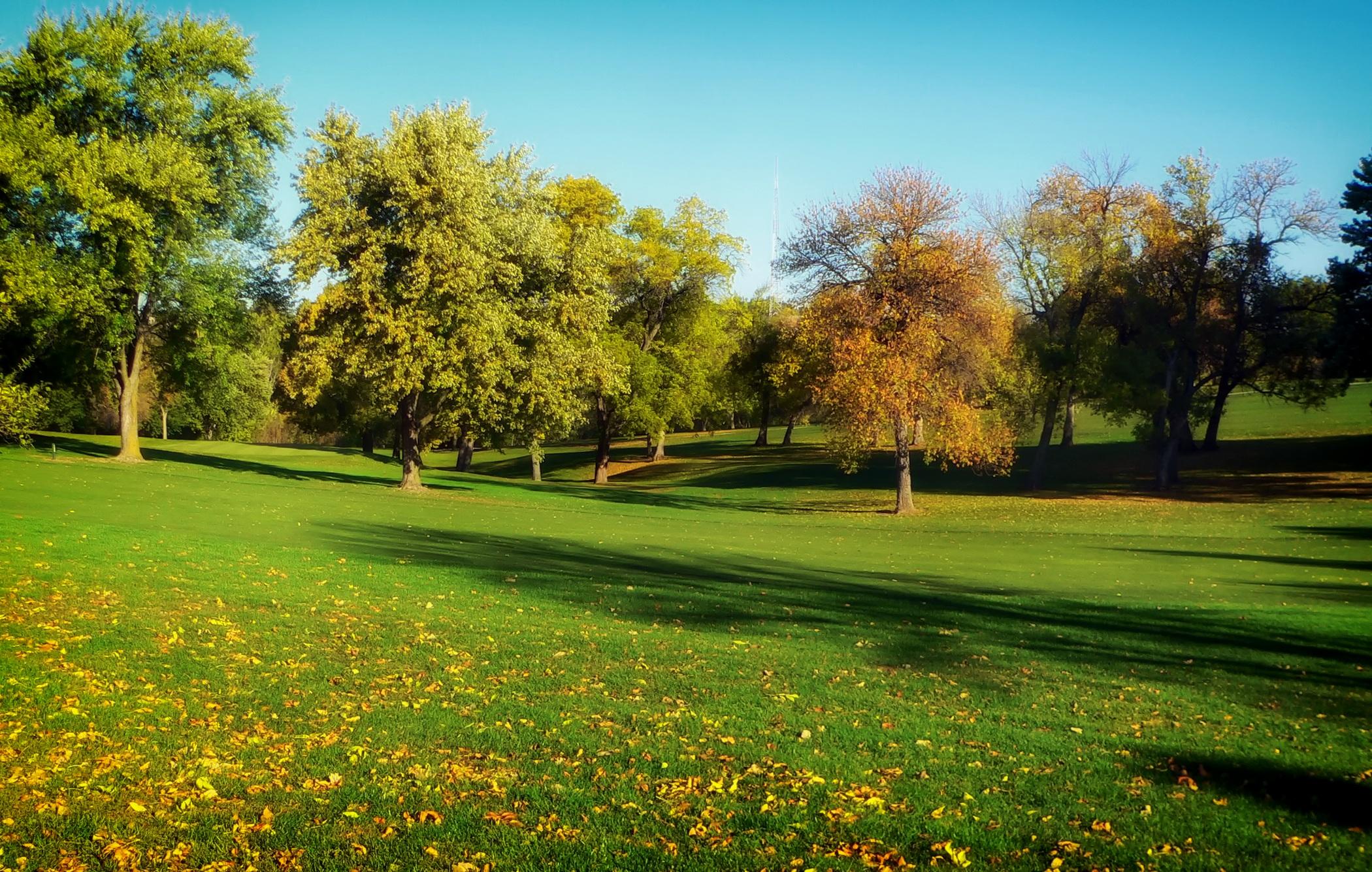 trees-grass-lawn-park.jpg