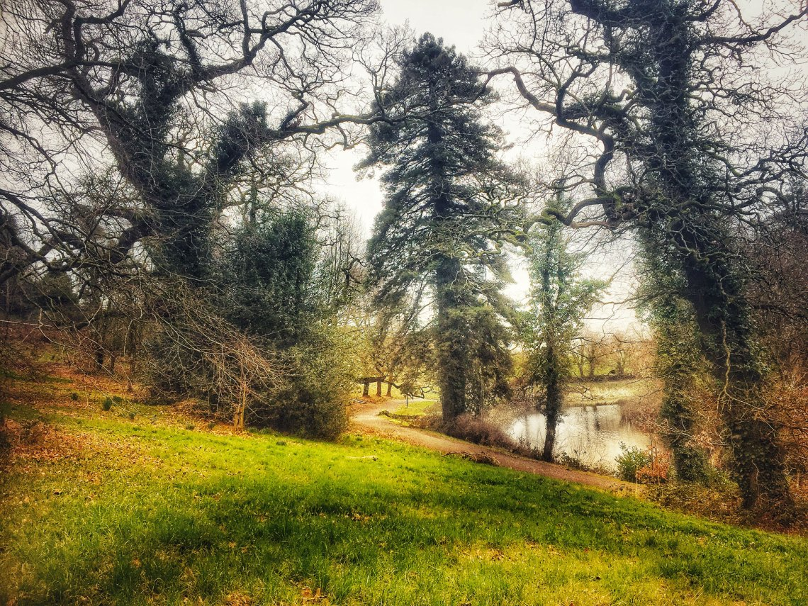 Some of the stunning scenery that awaits the artists on Day Two, in the woodlands of Ballinakill.