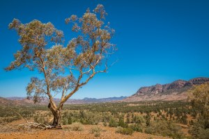 Aroona Valley - Flinders Ranges, South Australia