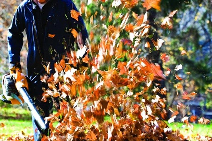 fall clean ups - yard clean up service