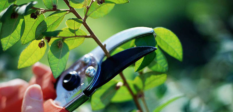 pruning - tree care services