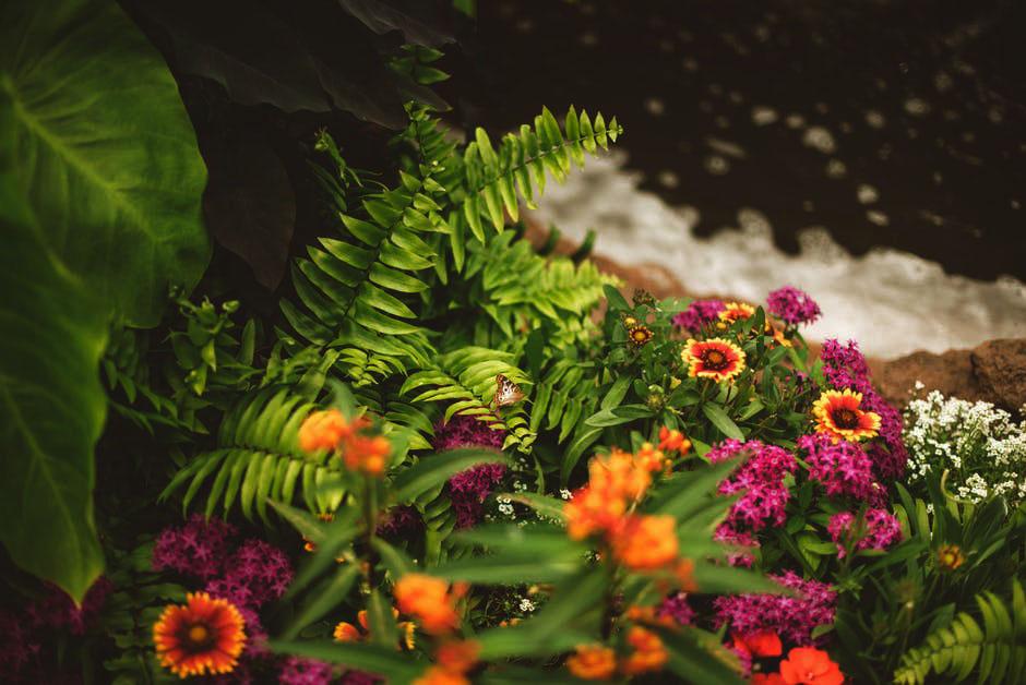 garden care services