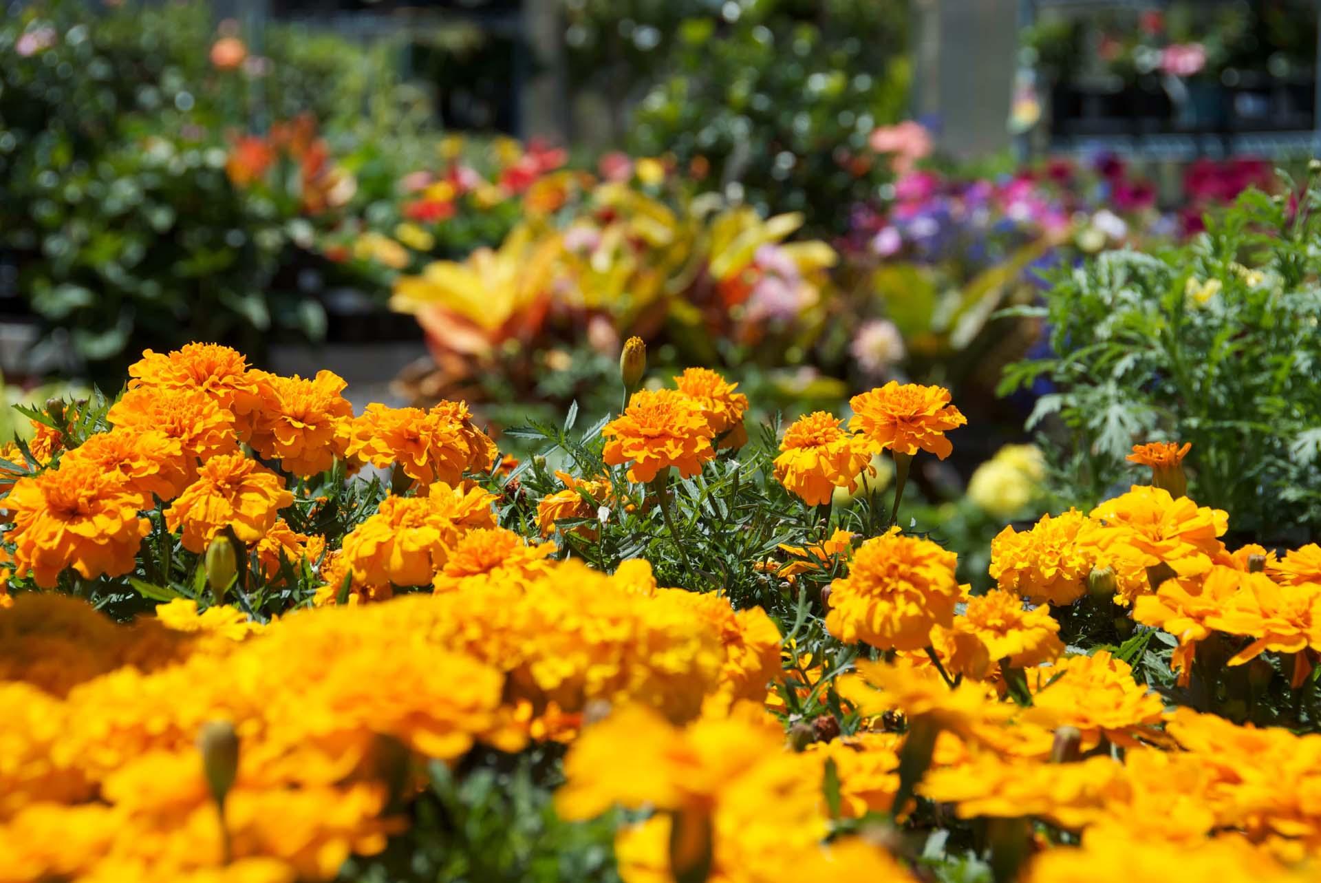 garden care - annuals garden