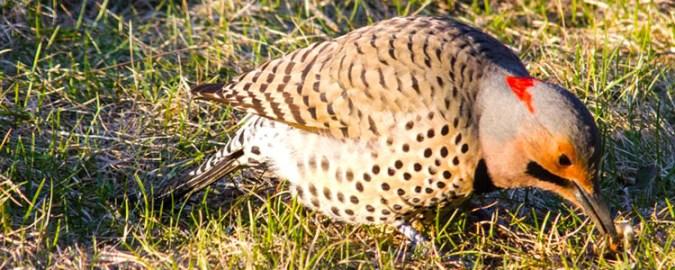 bird feeding on gribs