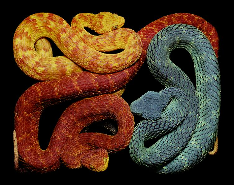 brightly-colored-snakes