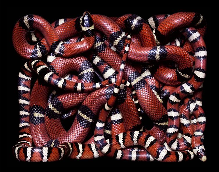 brilliant-snake-patterns