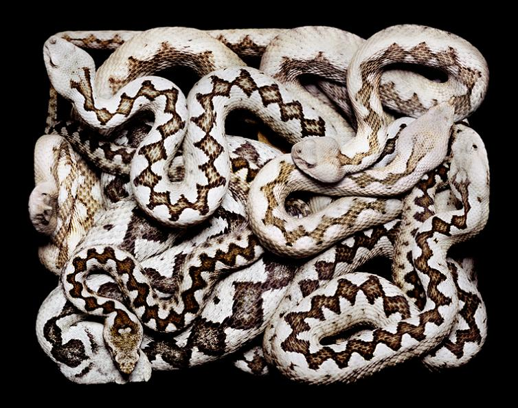 cool-snake-colors-white