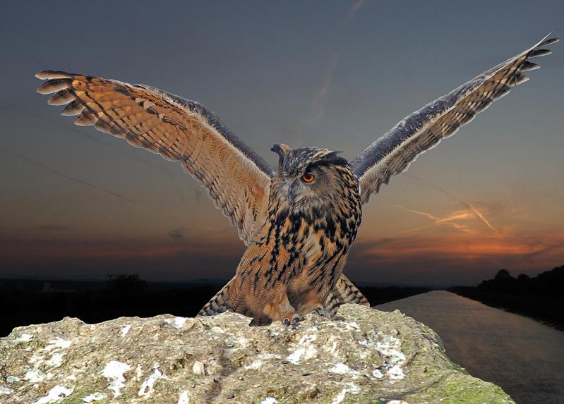 owl-landing-wings-spread