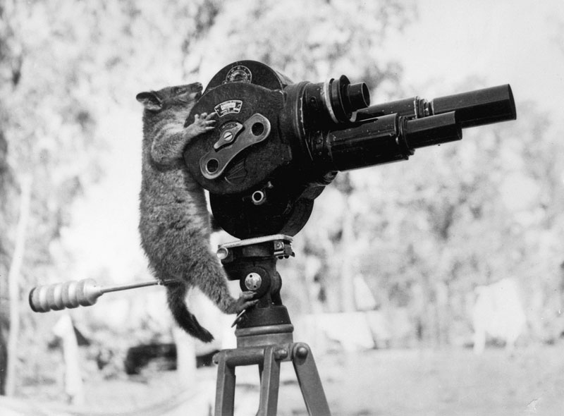 possum-and-a-movie-camera-1943