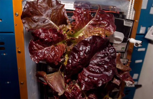 Astronauts on ISS Eat Veggies They Grew in Space ...
