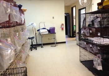 Grooming School in Arlington TX 05 da87a18b1930023571467d45c0e0dc6b 350x245 100 crop Grooming School   Janitorial Cleanup in Arlington, TX