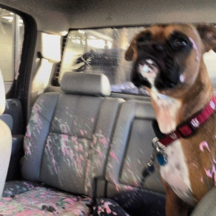Dutchie Opened The Window During A Car Wash