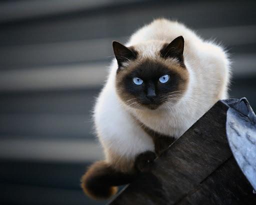 Самые красивые имена для кошек-девочек – 10 кличек для ...