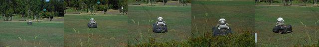 花菜ガーデン芝生