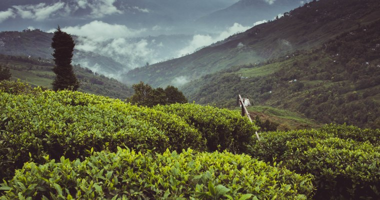 Field Notes: Darjeeling