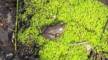 """Mr. Frog said, """"Don't bother me son, I'm busy!"""""""