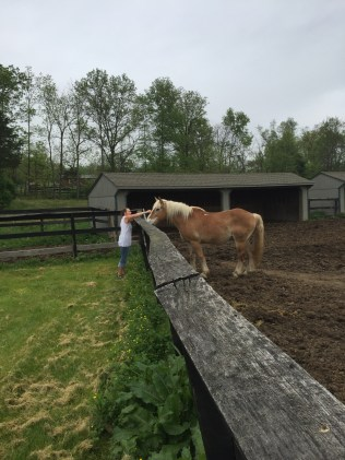 I married a horse whisperer...