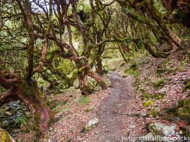 an amazing rhododendron forest
